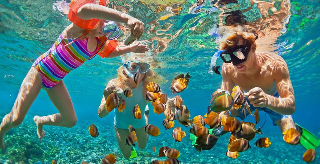 Snorkel in the coral reefs