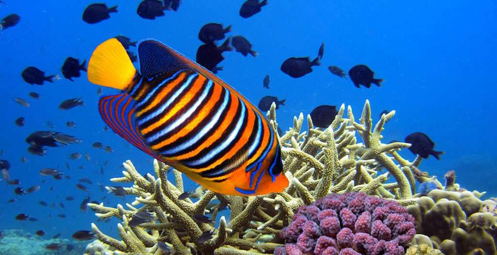 See the colourful coral reefs