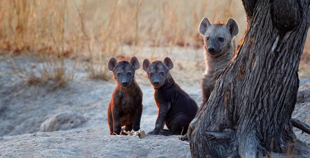 Spot endagered wild dogs