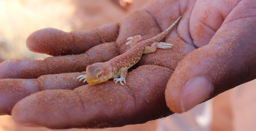 Meet creatures great and small