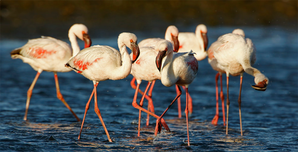See the flamingo's in Walvis Bay