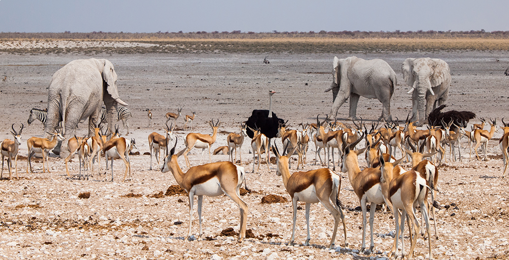 See animals at a watering hole