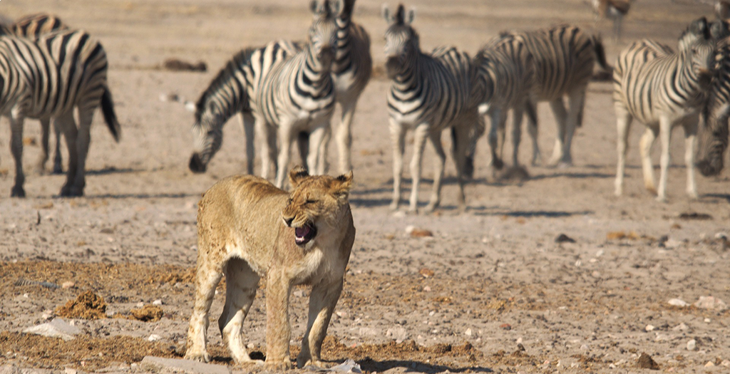 Visit a watering hole