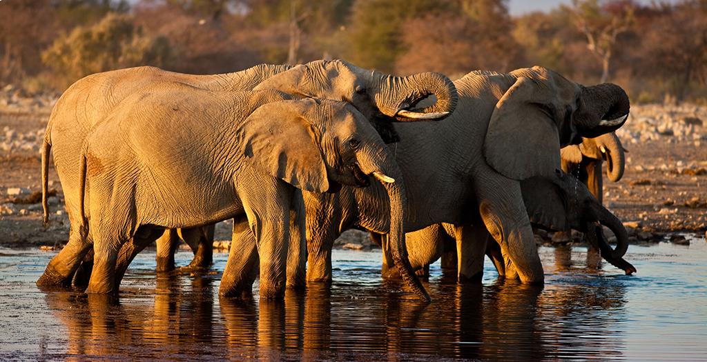 See animals at the watering hole