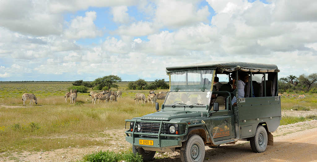 Go on a morning game drive