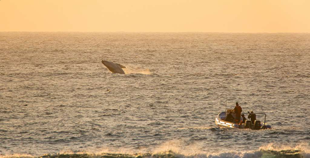See whales on the ocean experience