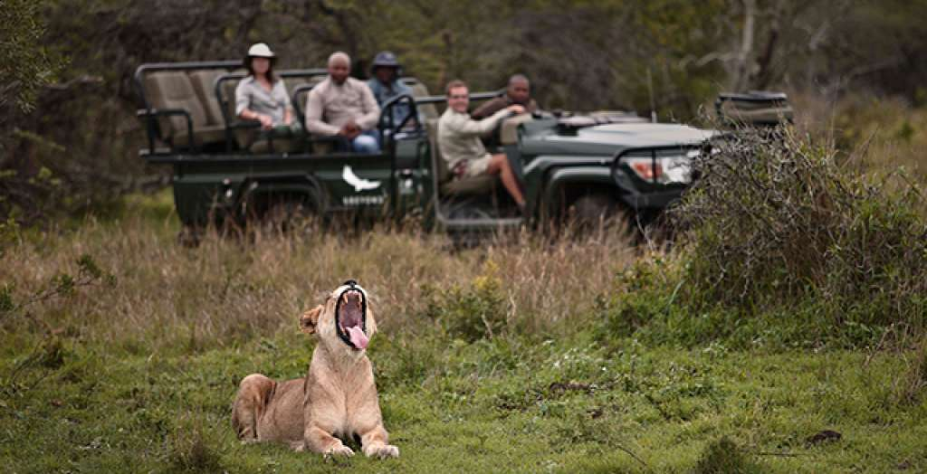 Go on a big 5 game drive