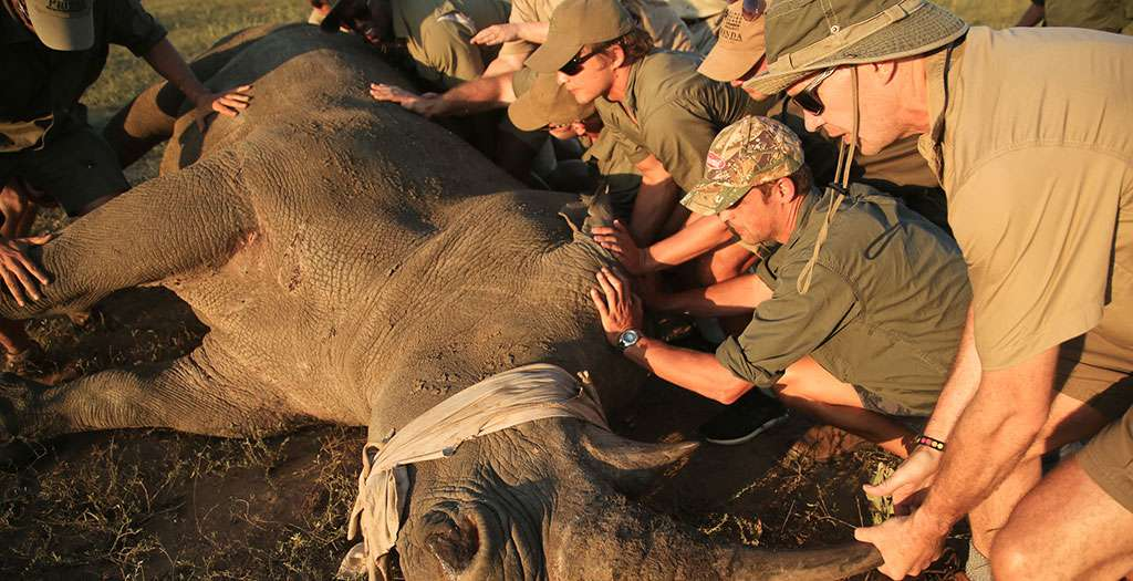 Take part in rhino conservation
