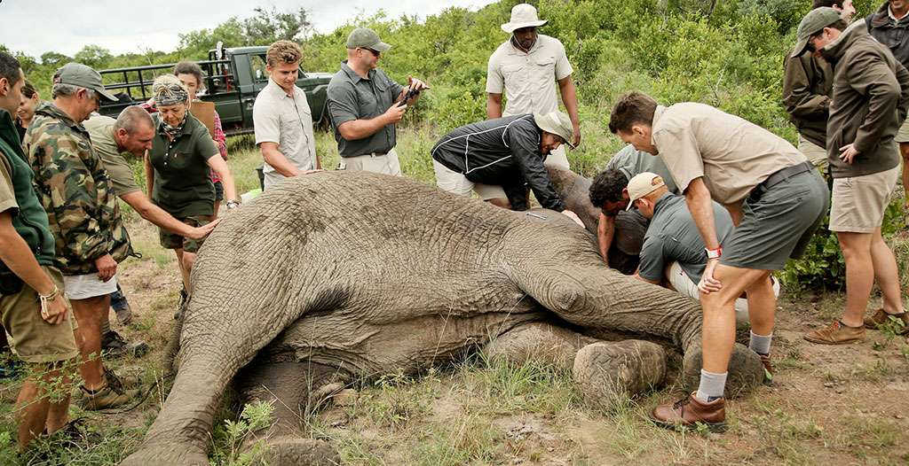 Take part in elephant conservation