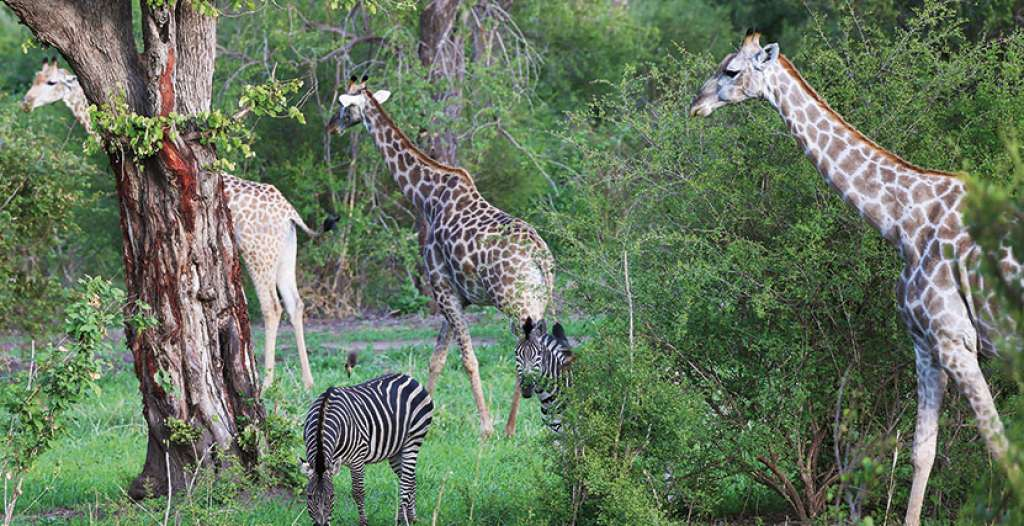 Enjoy excellent game viewing