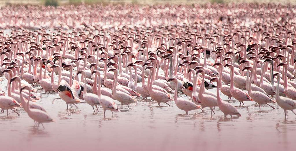 See the Flamingos of Kamfers Dam